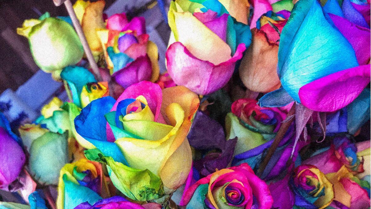 Farben und ihre Bedeutung Als Wandfarbe, Kleidung & mehr