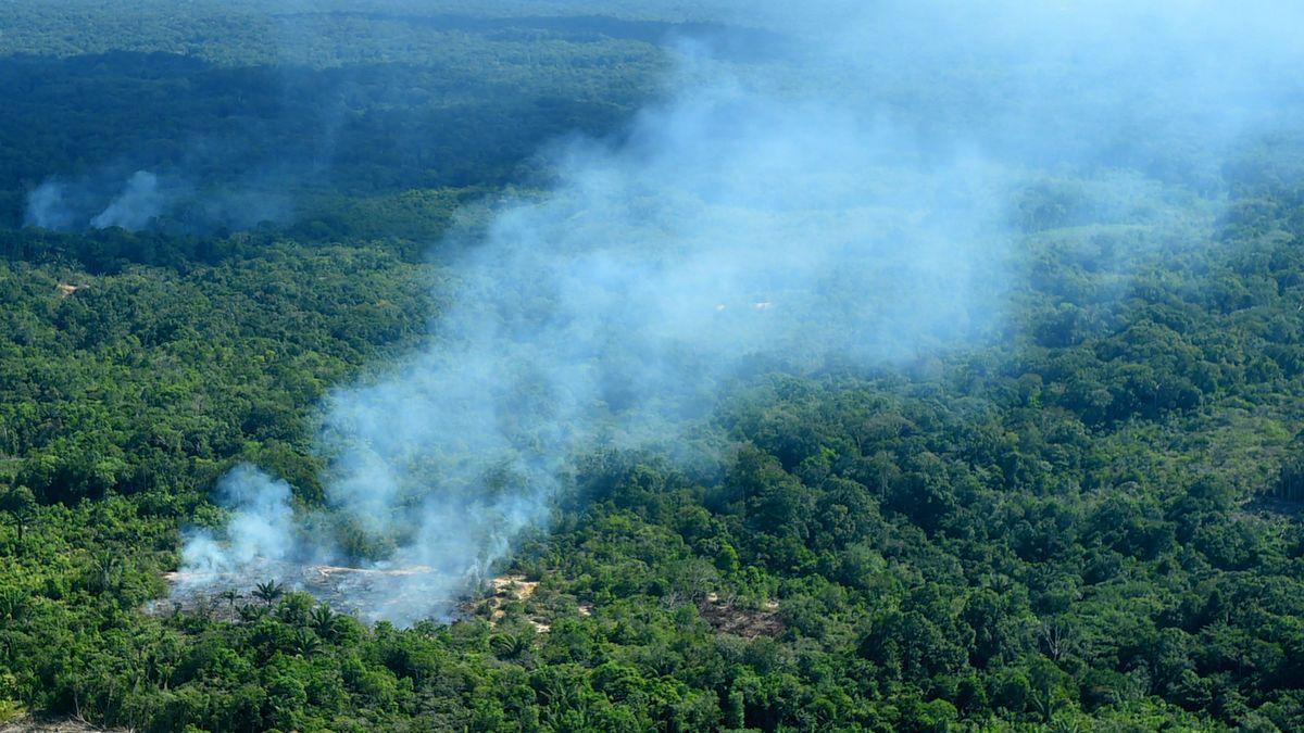 der amazonas regenwald