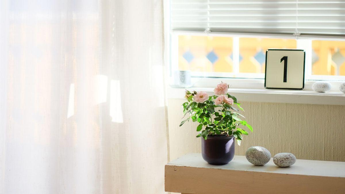Fenster Vor Neugierigen Blicken Schutzen So Geht S