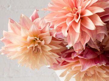 Wie Halten Blumen Länger Tipps Und Tricks