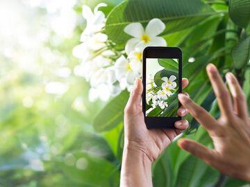 Plantnet Die App Die Pflanzen Erkennt