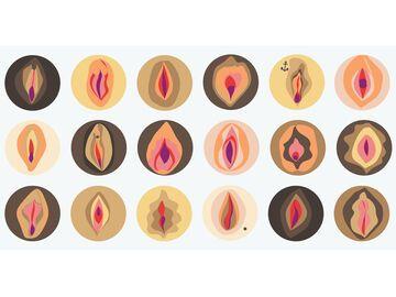 Vulva - alle Fakten und Irrtümer
