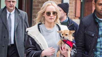 jennifer-lawrence-hund